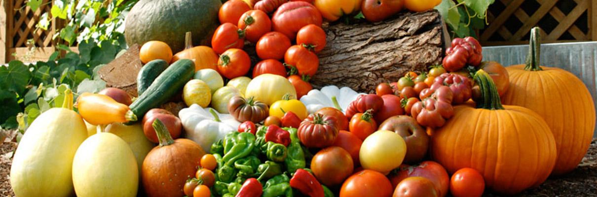 Blom-AGF-groenten-uit-de-tuin